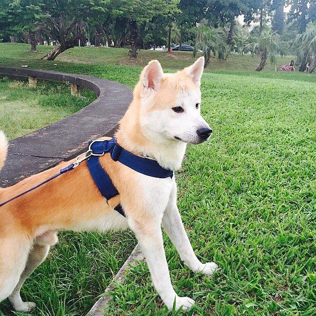 Les dix chiens les plus chers au monde